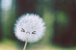 Sunny Sunday: The Dandelion of Self-Doubt