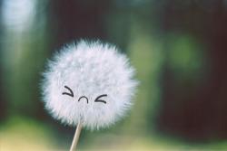 Sunny Sunday: The Dandelion ofSelf-Doubt